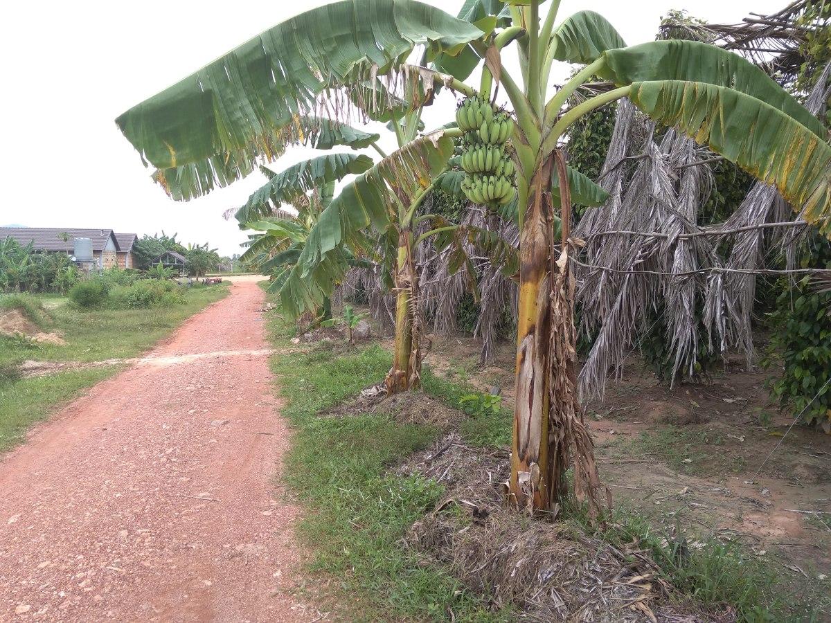 Egy borsos nap – Kambodzsaiborsföldeken